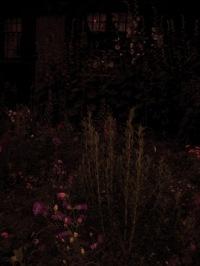garden_dark