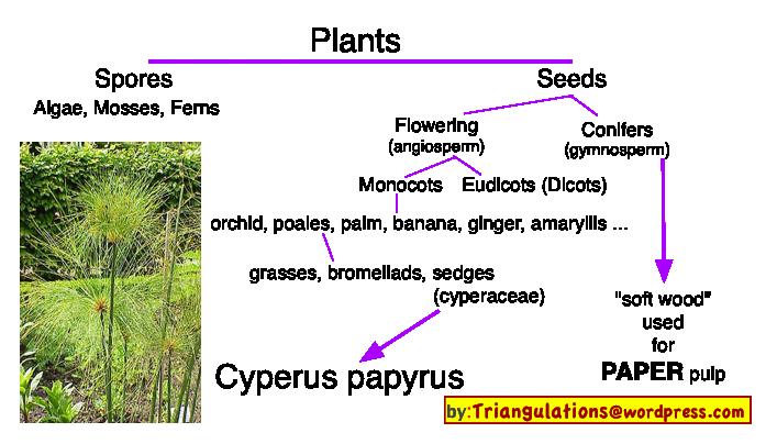 Linguistics | Triangulations