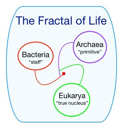 The Fractal of Life